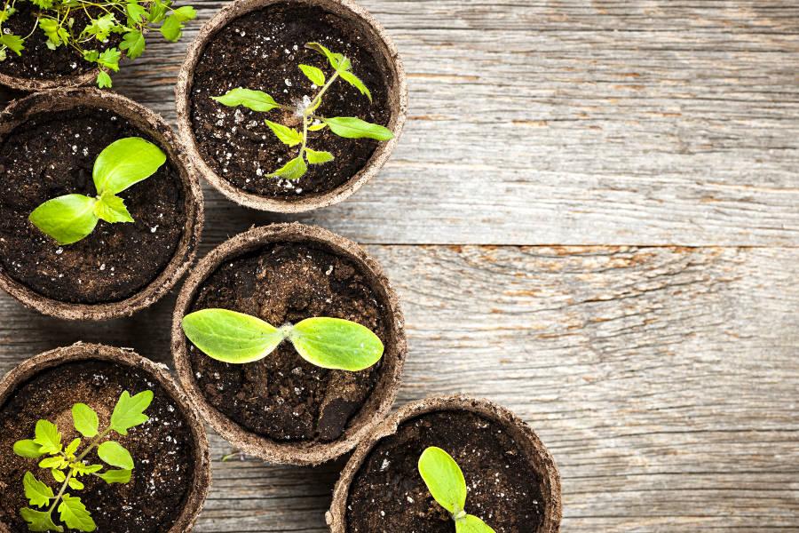 3 Tips for Avoiding Back Pain While Gardening